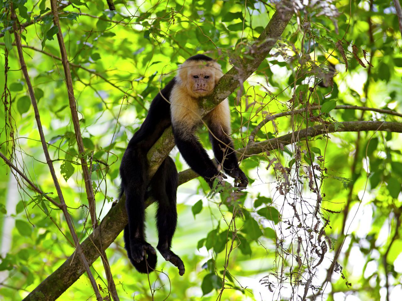 10 dias entre vulcões, animais exóticos e praias deslumbrantes na Costa Rica
