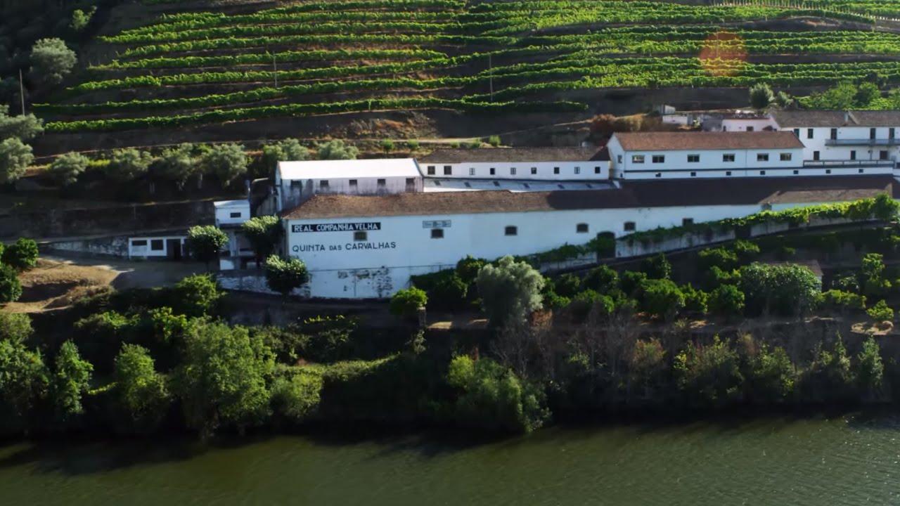 As cinco melhores Quintas para uma prova de vinhos no Alto Douro