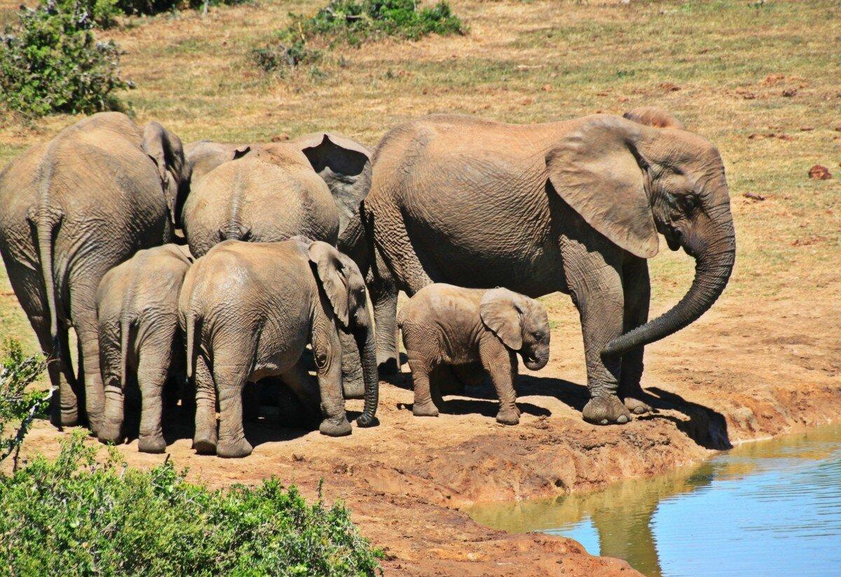 5 dicas para fazer um safari em África sem gastar muito dinheiro