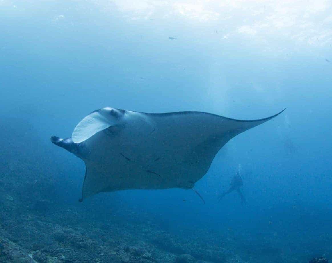 Estes são 7 dos melhores destinos do mundo para mergulhar